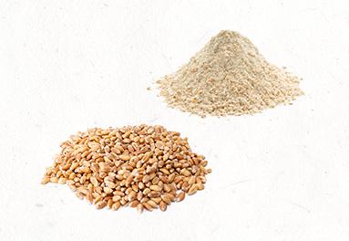 seeds-wheat